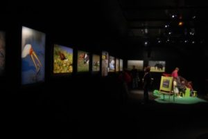Musée histoire naturelle au Havre