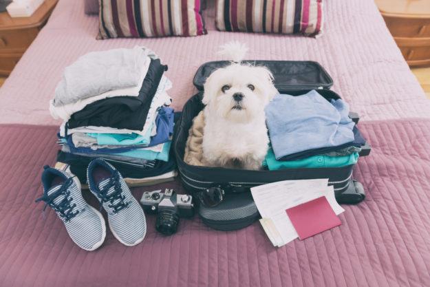 Animaux de compagnie en voyage